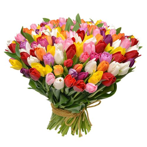 Bukiet 101 Tulipanów - Kwiaciarnia Ewa Augustów : Kwiaty ...
